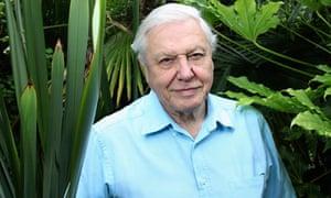 David Attenborough selected for grey power list