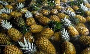 Costa Rica pineapples