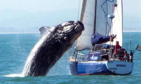 40-ton whale crash lands into boat off Cape Town