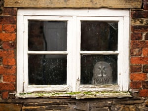 An owl in a window