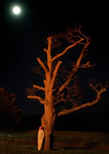 A spectator stands under a tree to watch a fireworks display on Bonfire night