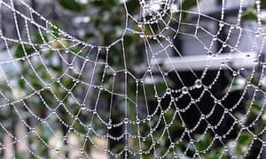 A spider's web photographed with the Sony DSC-QX10 smartphone lens