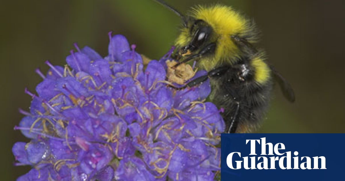 fe97cb1f4 Alys Fowler: living with bees? Here's what (not) to do | Life and ...