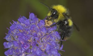 Alys Fowler: living with bees? Here's what (not) to do | Life and